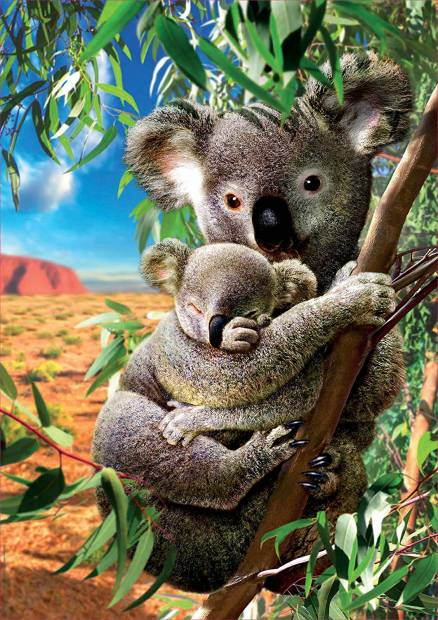 koala_mama_es_koelyke.jpg