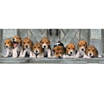Clementoni - 1000 darabos - 39435- Panoráma puzzle - Beagle kiskutyák