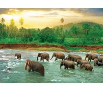 Eurographics - 1000 darabos -6000-5540- Save our Planet Collection - Rain Forest