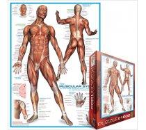 Eurographics - 1000 darabos -6000-2015 - Muscular System