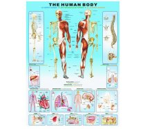 Eurographics - 1000 darabos -6000-1000 - Human Body