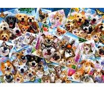 Perre-Anatolian - 2000 darabos - 3947 - Selfie Pet Collage