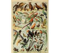 Grafika - 1000 darabos 00596 - Oiseaux