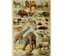 Grafika - 1000 darabos 00594 - Mammals