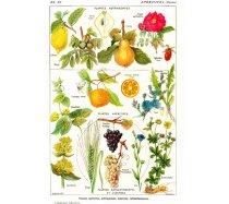 Grafika - 1000 darabos 00591 - Medicinal plants