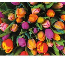 Piatnik - 1000 darabos puzzle - 553943 - Tulipánok