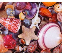 Piatnik - 1000 darabos puzzle - 566349 - Kagylók