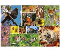 Otter-House - 1000 darabos - 75085 - RSPB - Great British Wildlife